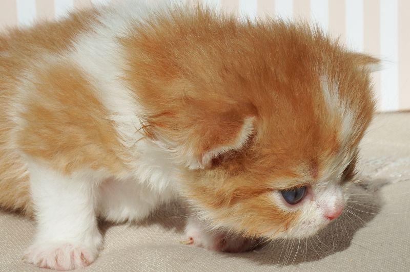 pretty & lovely catsへようこそ!